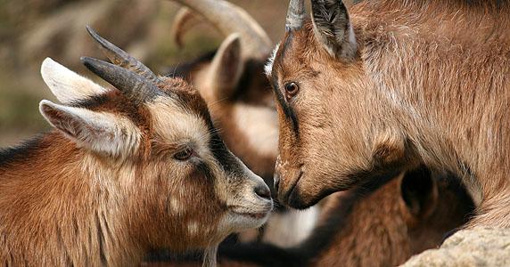 12 maneras de respetar a los animales